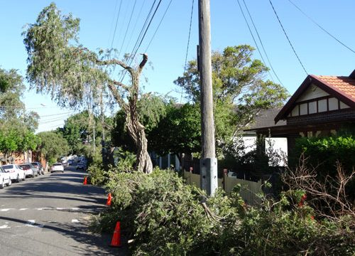 Tree Removal Naples