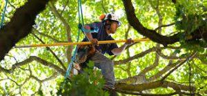tree removal Jacksonville