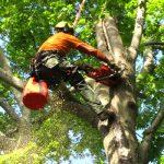 Tree-Trimming-Naples