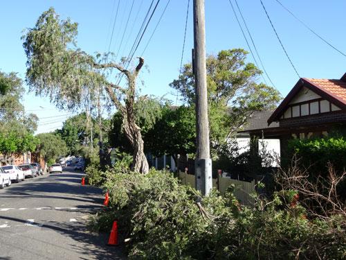 Tree Removal Naples