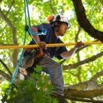 tree service 6